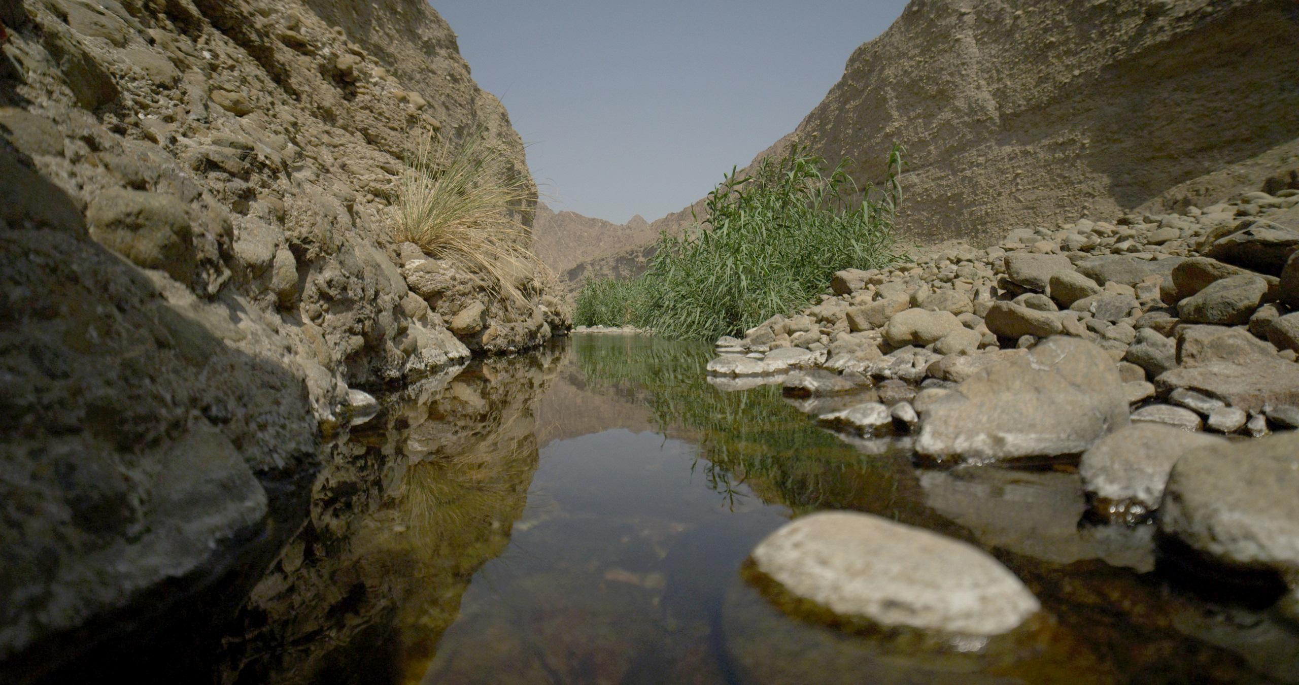 وادي الوريعة