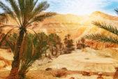 إكتشفي أروع الواحات أثناء تواجدك في صحراء تونس!