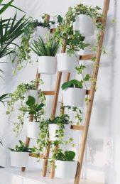 فكرة مبتكرة وسهلة التطبيق في مختلف غرف المنزل، وترتكز على تثبيت النباتات المتنوعة على سلّمين متشابهين.