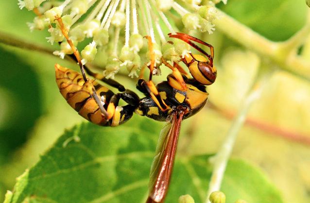 تفسير حلم الحشرات السامة - أنوثة