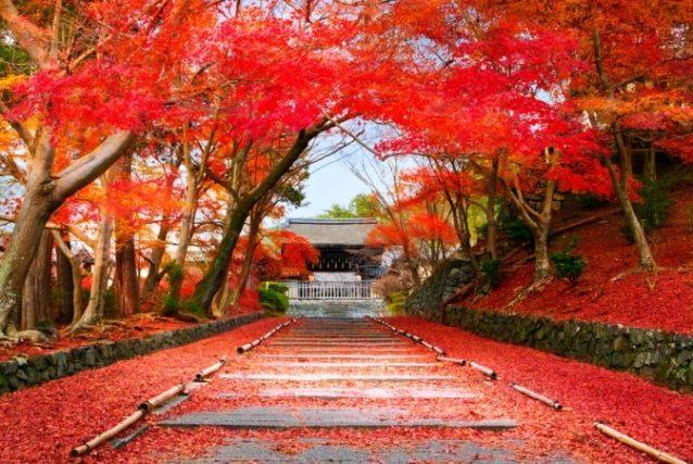 <strong>كيوتو - اليابان<br /> Kyoto - Japan<br /><br /> </strong>تعتبر اليابان من أجمل الدول التي تحلو زيارتها خلال فصل الخريف، وخصوصاً مدينة كيوتو التي ترتدي طبيعتها أروع حلّة خلال هذه الفترة من السنة.