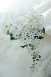 باقة زهور دائرية من الياسمين الأبيض المحاط بالأوراق الخضراء الصغيرة، هذا ويتدلى منها أيضاً غصن صغير من الزهرة نفسها.