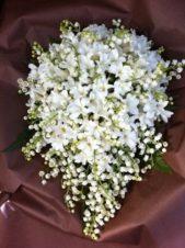 تتداخل أغصان زهرة الياسمين مع أزهار الموجيت بشكل رائع، ويطغى على هذه الباقة اللون الأبيض الذي سيليق تماماً بعروس 2019.