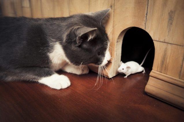 حلم القط والفأر... هل يجب أن تقلقي منه؟