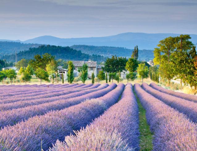 <p><strong>بروفانس - Provence</strong></p> <p>شواطئ كثيرة وشاسعة في بروفانس تحلو فيها ممارسة الرياضات المائية والأنشطة المسلية. لا تنسي التوجه إلى سهول اللافندر في هذه المدينة الساحلية لتشاهدي منظراً طبيعياً لن يتكرر حيث الجبال الألبانية تحتضن سهول بروفانس البنفسجية.</p>