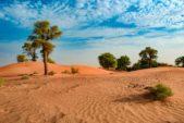 الصحراء العربية تغطي مساحات واسعة من الشارقة.