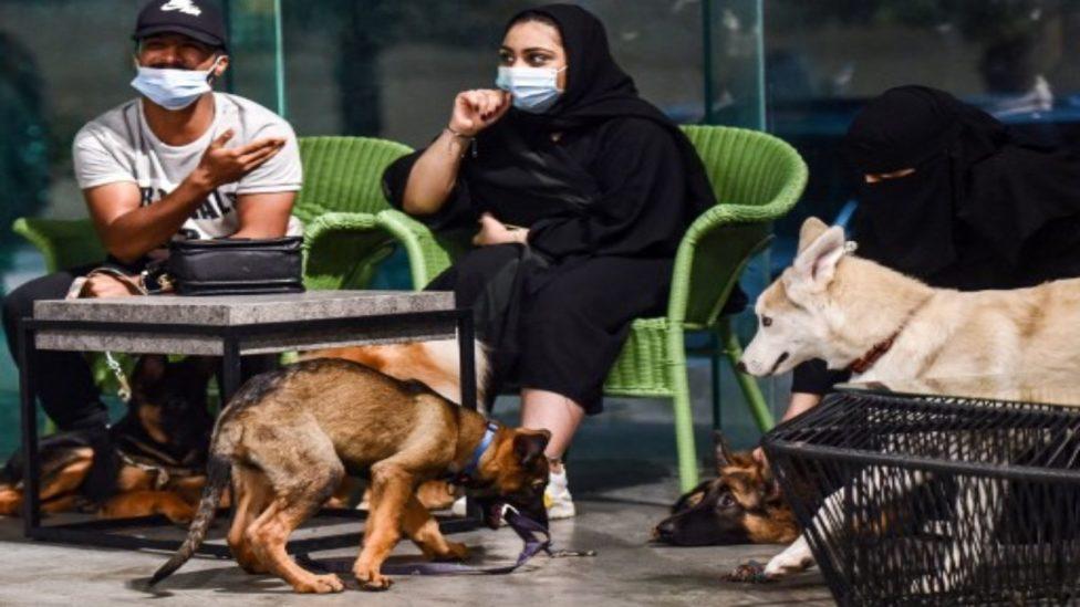 أوّل مقهى للكلاب في السعودية يفتح أبوابه! وصاحبته شابة كويتية